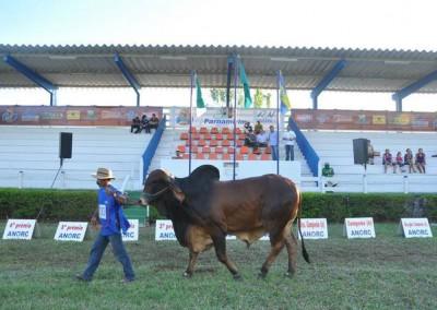 Festaboigir6_2011